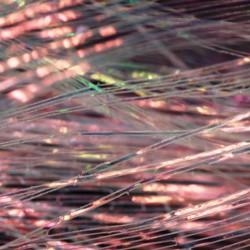Perdigonmania Pearl Iridescent Strips PPB